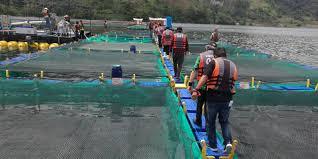 Jenis Budidaya Ikan Tawar Yang Paling Menguntungkan Untuk Pemula