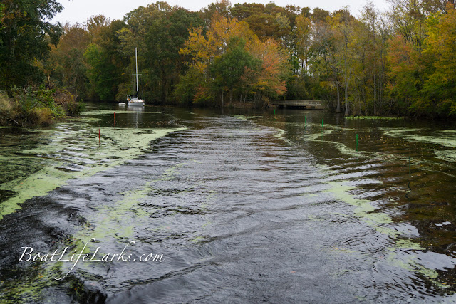 Boater transits a staked channel, Dismal Swamp, South Mills area