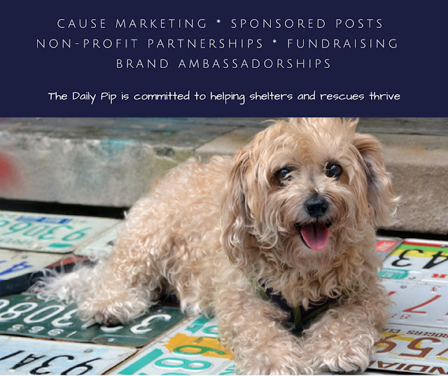 The Daily Pip chooses to work with pro-rescue, earth-friendly compassionate brands