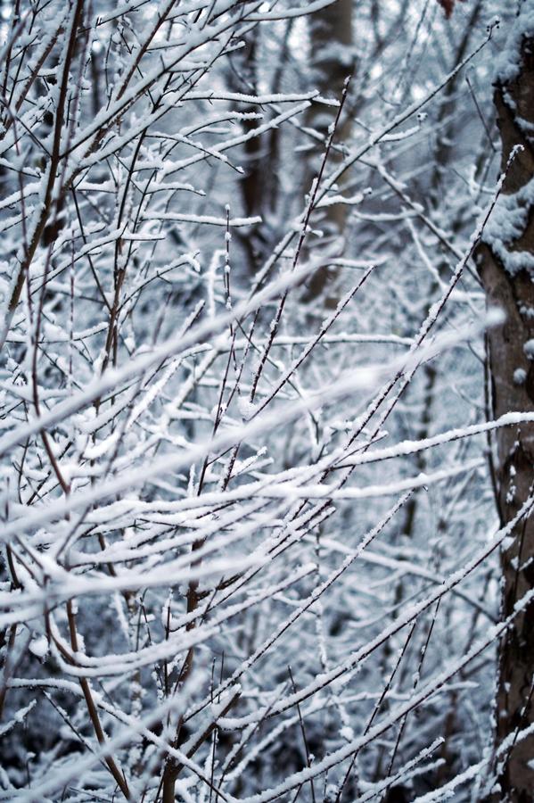 Blog + Fotografie by it's me! - Winter für einen Tag - verschneites Geäst