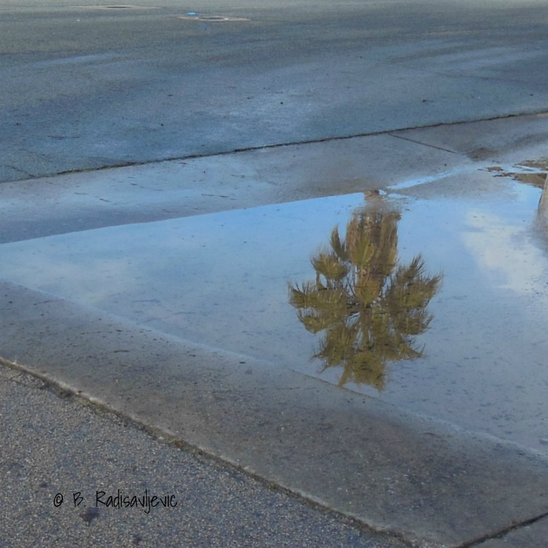 Reflections and a Sliver of Sunshine