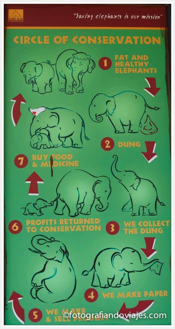 ciclo de excrementos de elefantes