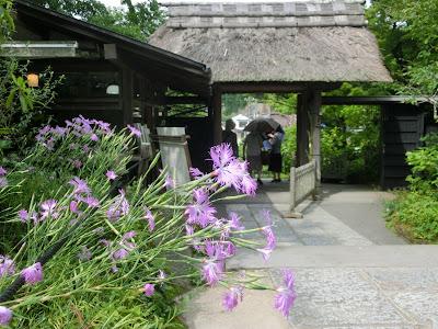 東慶寺のナデシコ