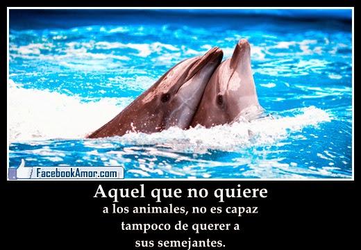 Amor Frase Bonito Delfines Animados Www Imagenesmy Com