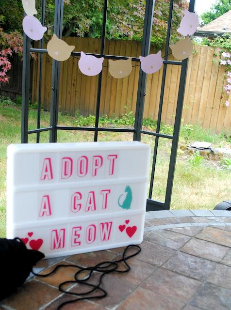 Adopt a cat sign