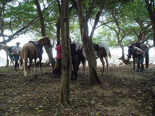 costa rica hevonen ratsastus matkailu