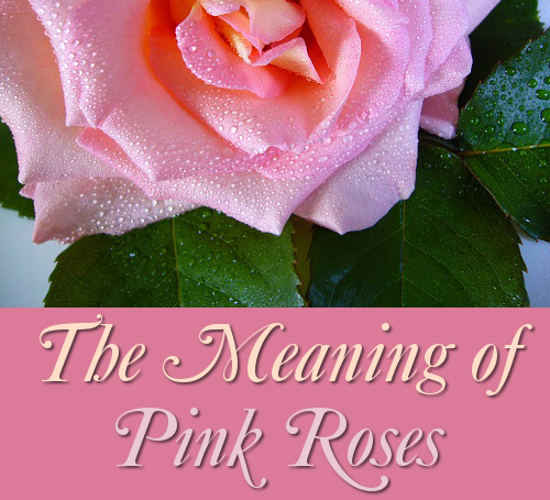 The Symbolism and Meaning of Pink Roses: Rose Flower Meanings