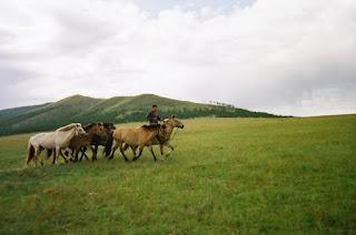 mongolia, mongolianhevonen, ratsastusmatka, riitta reissaa