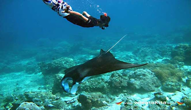 Manado Indonesia diving