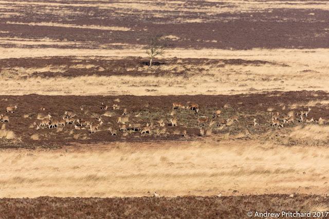 The herd of deer relaxing on hillside in the Winter sun.