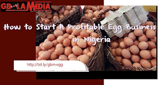 How to Start Egg Business in Nigeria