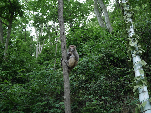 monkey in a tree in Guiyang