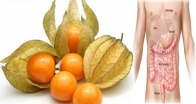 This Small Fruit Helps You In Fighting Against Prostate and Colon Cancer And Other Stomach Problems!