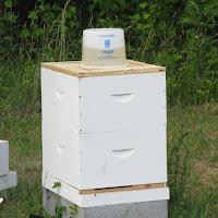 Beekeeping Week 1 Checking And Feeding Farmstead