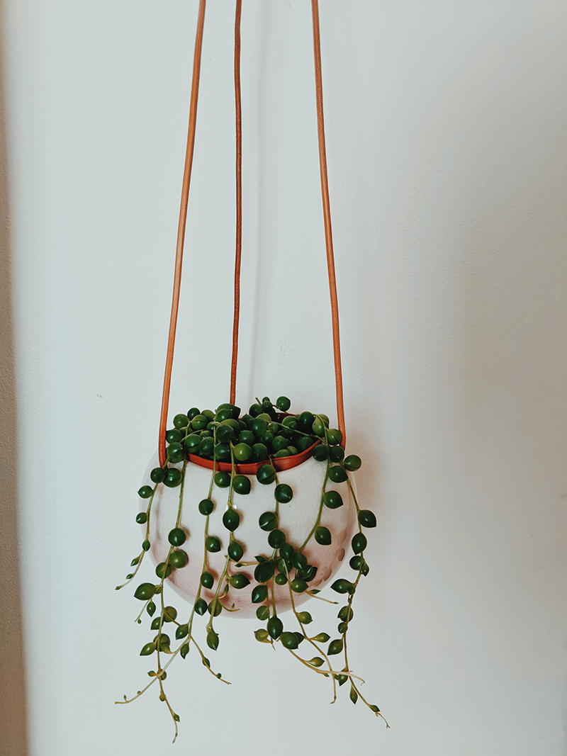 hanging plant inspiration