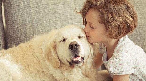perros prefieren cariño a alimentos