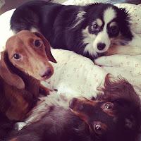 my stupid dogs <3