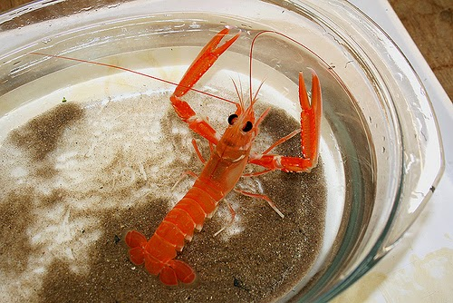 Behind the French Menu: Crevettes - Shrimps and Prawns on French Menus. Shrimps and Prawns are ...