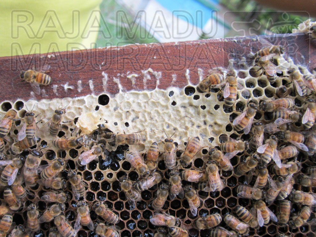 Sarang Lebah yang Sudah Tua