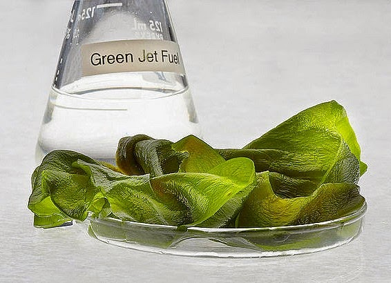 jet fuel made from algae