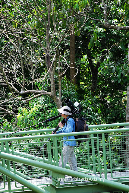 Bird Watcher in Sabah