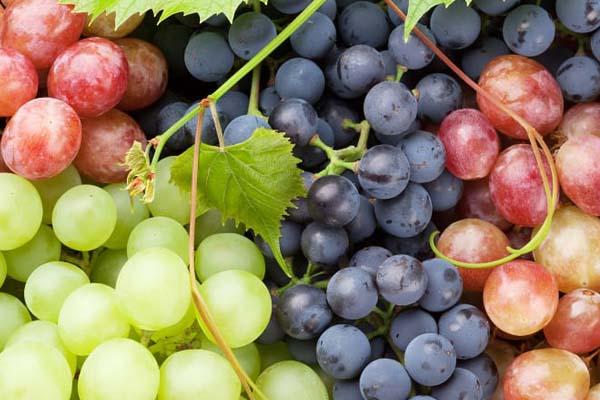 Kandungan Nutrisi Buah Anggur Dan Manfaat Buah Anggur