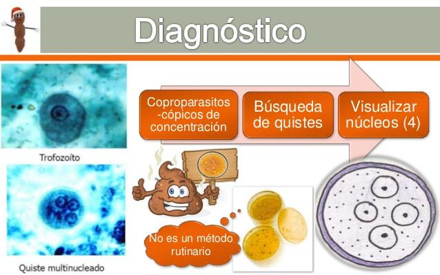 Giardiasis parazitológia - Giardia virus mens