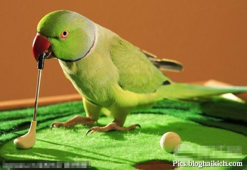 Hình ảnh vui về động vật sành điệu nhất