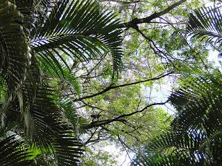 alto da vegetação com um macaco pequeno no meio já dentro de inhotim