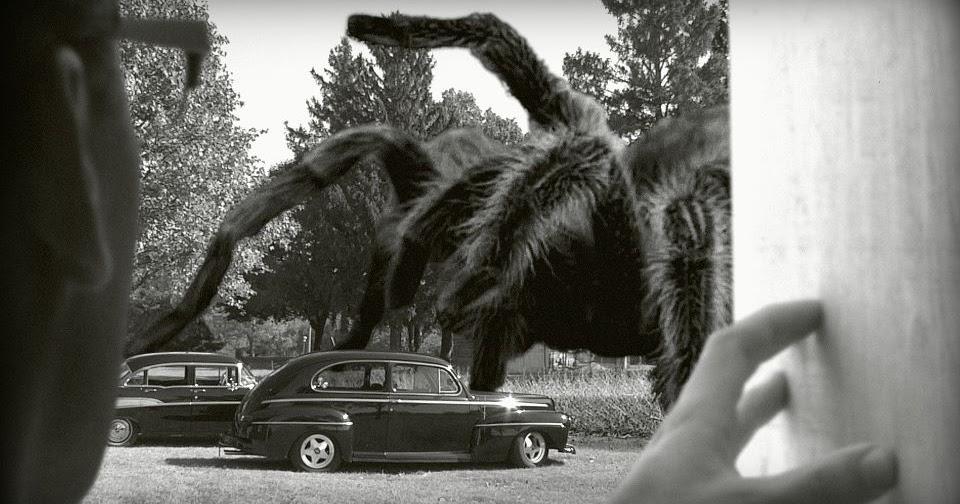 Congolese Giant Spider The Crypto Crew