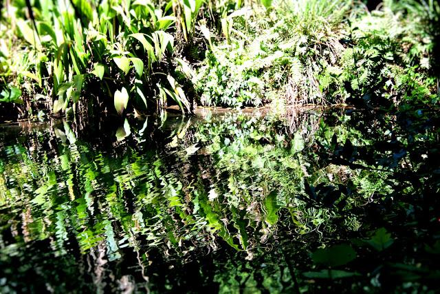 acqua, lago, vegetazione, piante