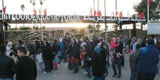 Zoologique de Rabat, Tujuan Wisata Keluarga Seru