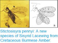 http://sciencythoughts.blogspot.co.uk/2018/03/stictosisyra-pennyi-new-species-of.html