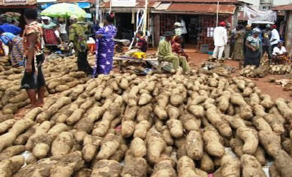 Chinese govt demands dry yam from Nigeria