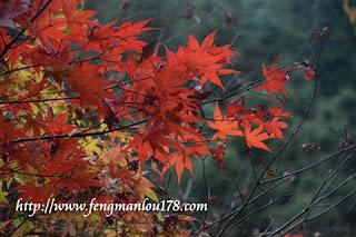 杉林溪红枫叶