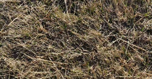 Image Result For How To Care For Your Lawn