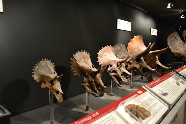 Музей Скелястих гір у місті Бозмен, Монтана (Museum of the Rockies, Bozeman, Montana)