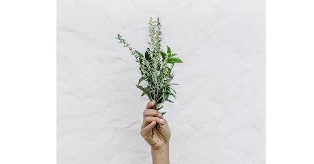 biljne tablete za menopauzu