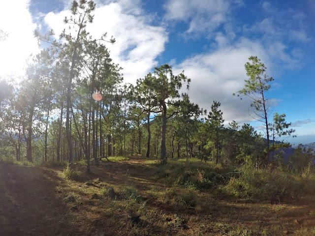 Pine Trees Mt. Ulap x #travelinfinite #rsalastravels