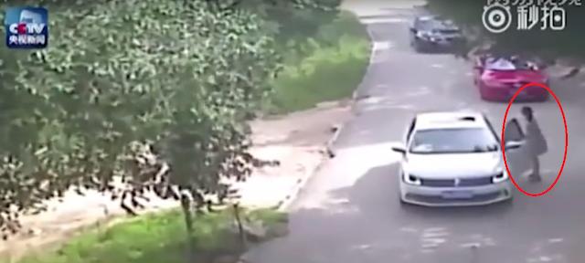 VIDEO : Di Taman Safari, Perempuan Ini di terkam Harimau, Saat Keluar Dari Mobil.