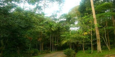 Kebun Raya Bukit Sari Jambi Wisata Bisa Menambah Ilmu Pengetahuan