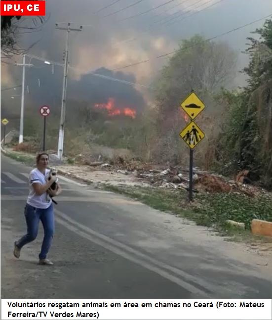 Incêndio destrói mata na área de proteção da Bica do Ipu
