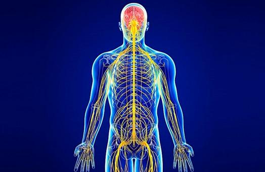 ¿Cuáles son algunas enfermedades comunes del sistema nervioso?