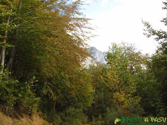 Bosque bajando a Fuente De.