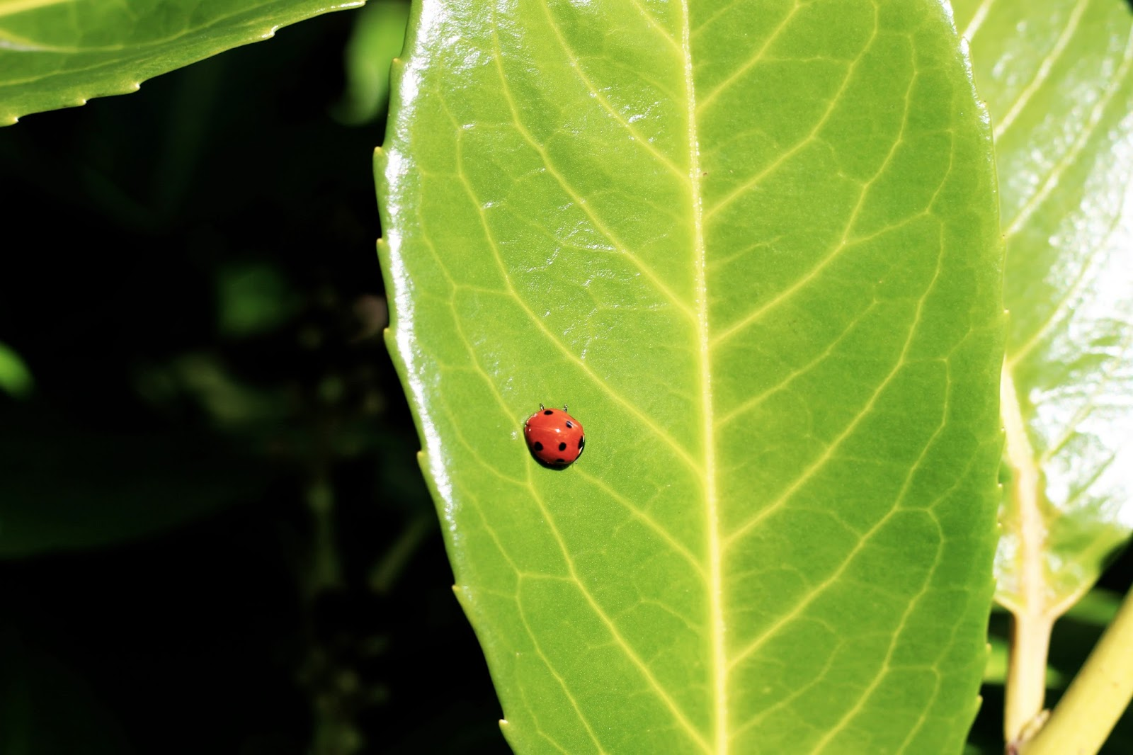 ladybird nature wildlife photography