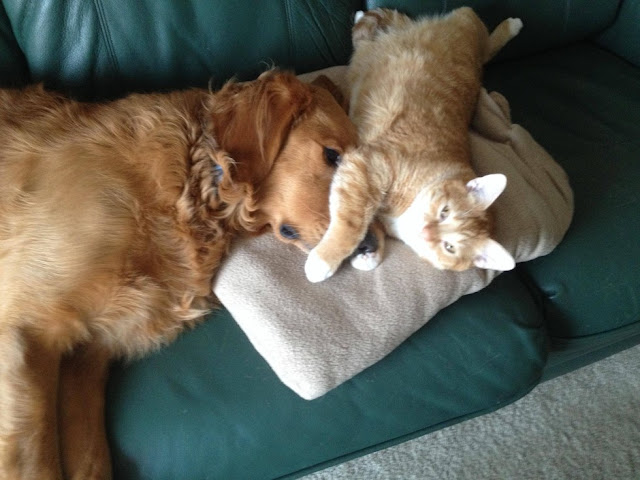 top 20 cats which are living frankly with dogs
