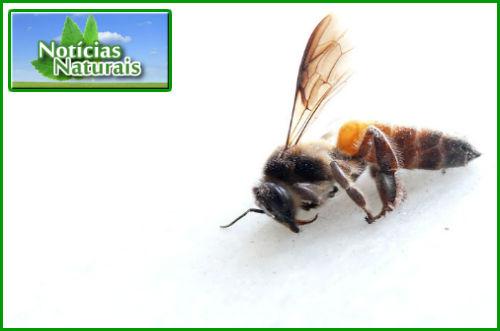 [Imagem: Cientistas-Culpam-a-Monsanto-Pela-Crise-...belhas.jpg]