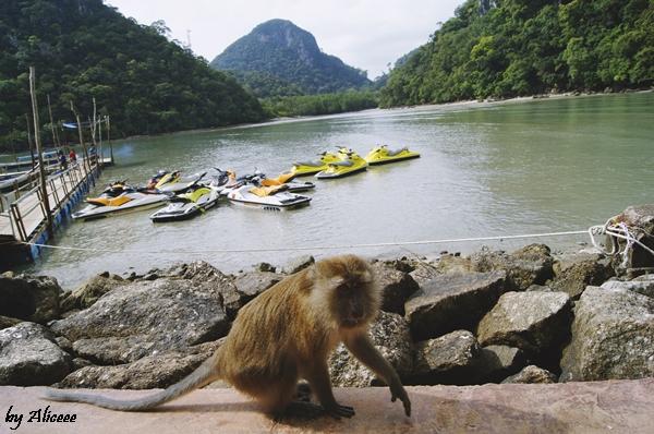 Maimute-Malaezia