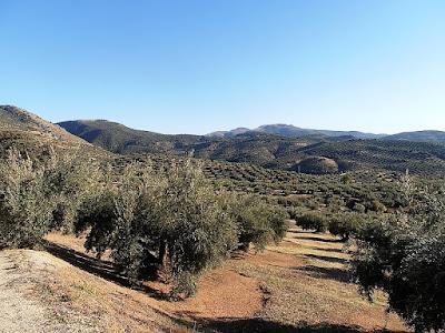 Olive Groves, Sierra Sur de Jaen