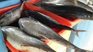 pasar ikan pantai tambakrejo blitar